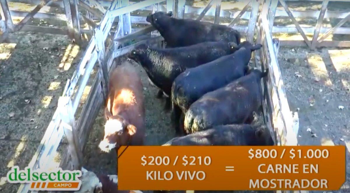 Precio de la carne en Argentina: se achica el margen del matarife y el carnicero